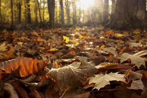 بالصور اقوال عن فصل الخريف , اصعب فصول السنة 13763 2