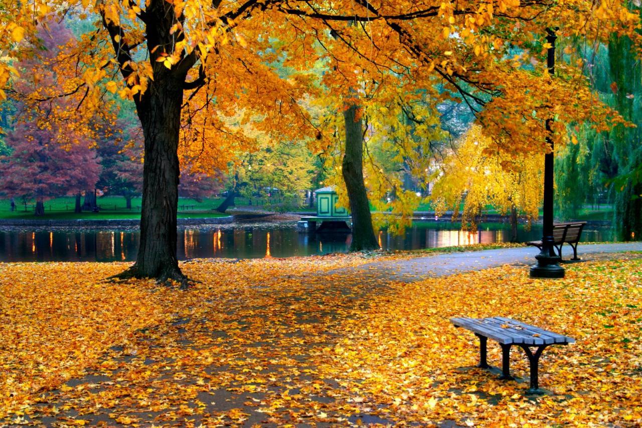بالصور اقوال عن فصل الخريف , اصعب فصول السنة 13763 4