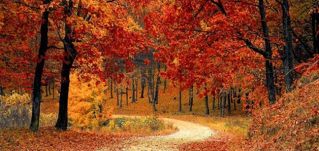 بالصور اقوال عن فصل الخريف , اصعب فصول السنة 13763 6