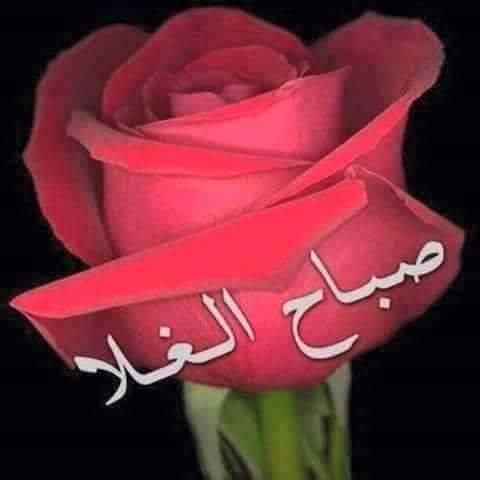 بالصور صباح الخير للحبيب , اجمل رسالة لبداية رومانسية لليوم 2480 9