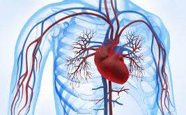 صور علاج مرض القلب , تاثير مرضه القلب علي الانسان