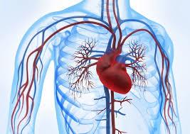 صورة علاج مرض القلب , تاثير مرضه القلب علي الانسان