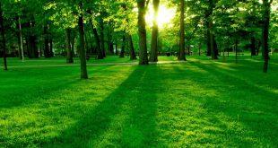 صورة خلفية خضراء , خلفية شاشة خضراء غامقة وفاتحة ومناظر طبيعية