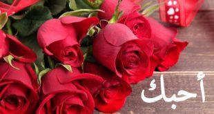 بالصور ورود رومانسية , اروع الزهور لعشاق الرومانسية 3168 11 310x165