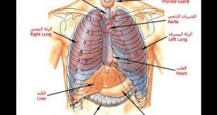 صورة صور جسم الانسان , تعرف بالصور على جسم الانسان