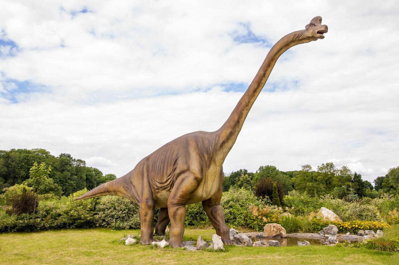 صورة اكبر حيوان في العالم 1248 1