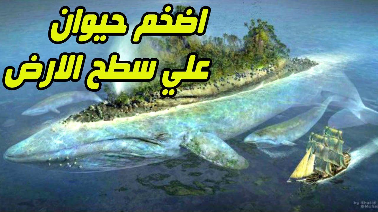 صورة اكبر حيوان في العالم 1248 3