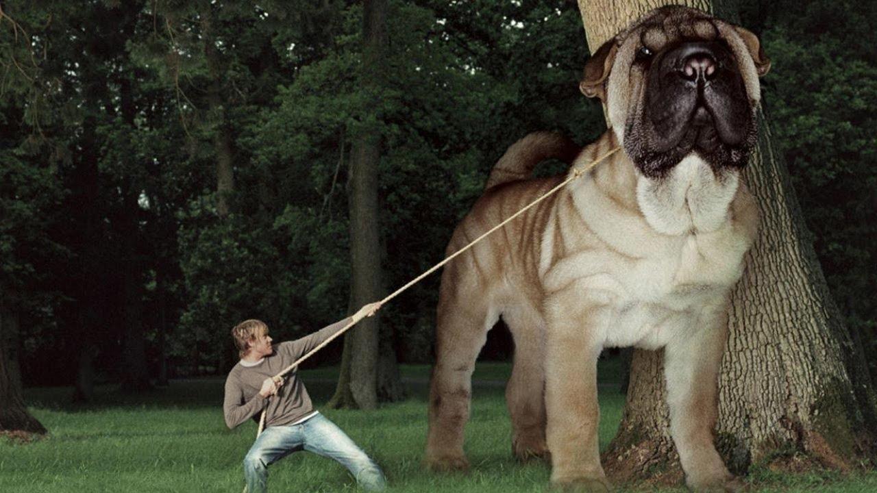 صورة اكبر حيوان في العالم 1248 4