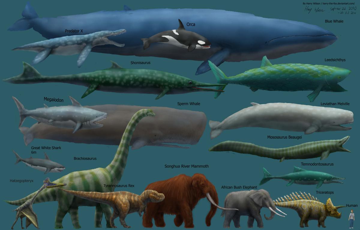 صورة اكبر حيوان في العالم 1248 6