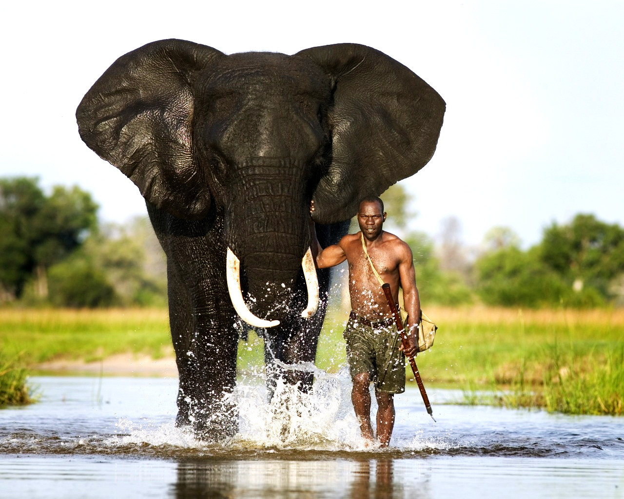 صورة اكبر حيوان في العالم 1248 7
