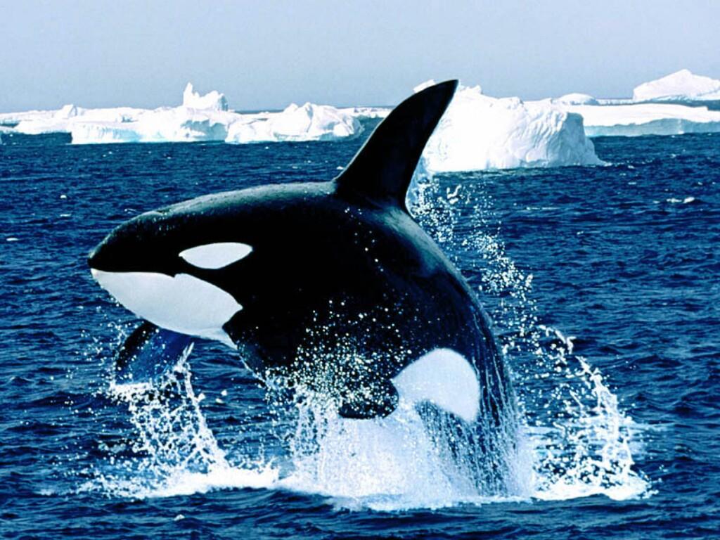 صورة اكبر حيوان في العالم 1248 8