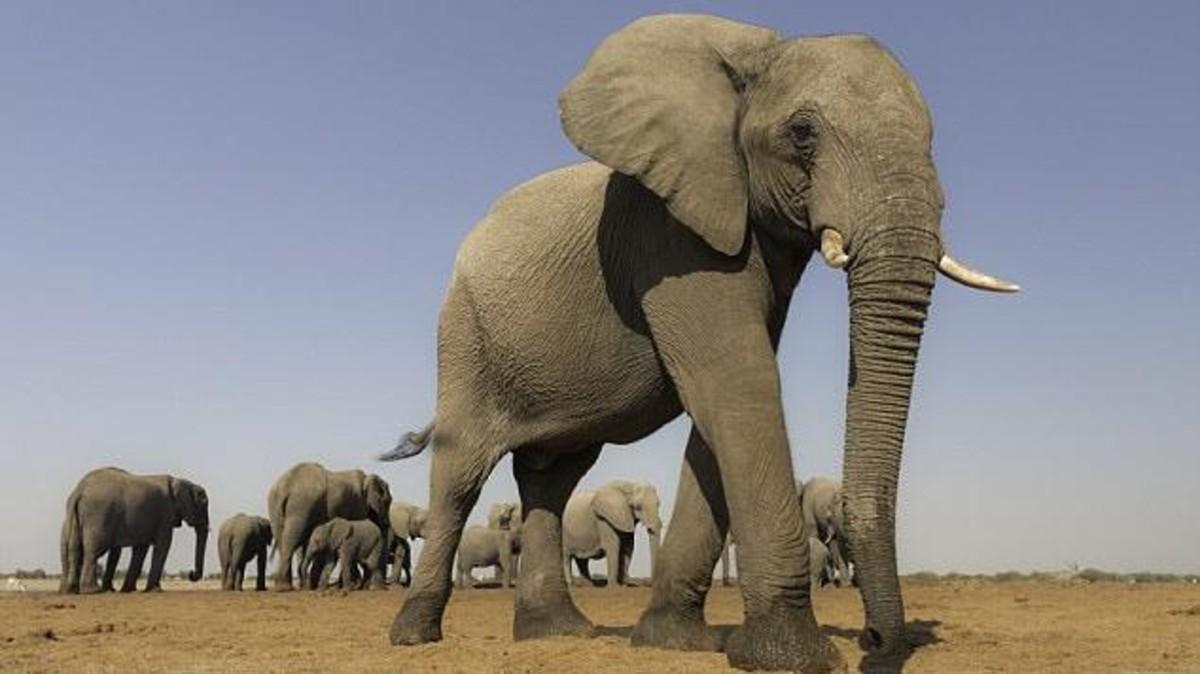 صورة اكبر حيوان في العالم