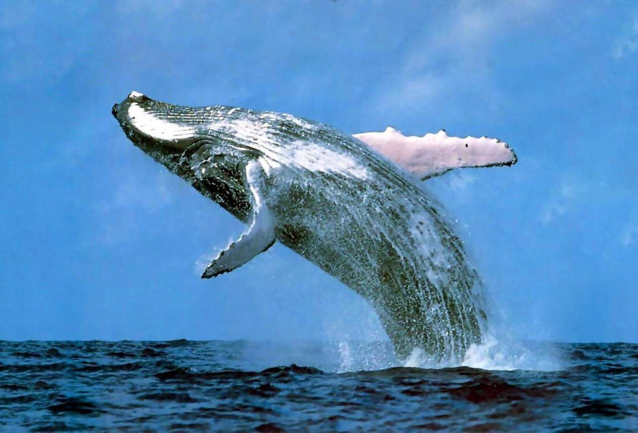 صورة اكبر حيوان في العالم 1248