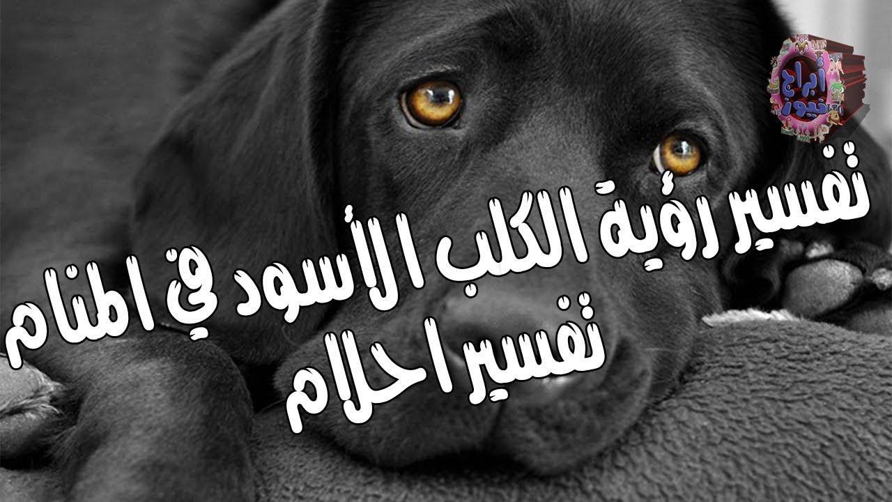 كلب اسود في الحلم عبارات